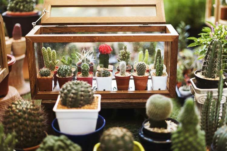 cactus-house-pack